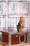 """INFRAFŰTÉSES Thermo WOODY cicaház """"CAT"""" ablakos belméret (H*SZxM:54x38x28cm)"""
