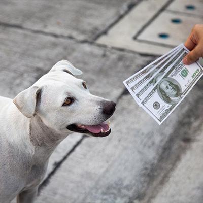 Kutyaház árak 2020