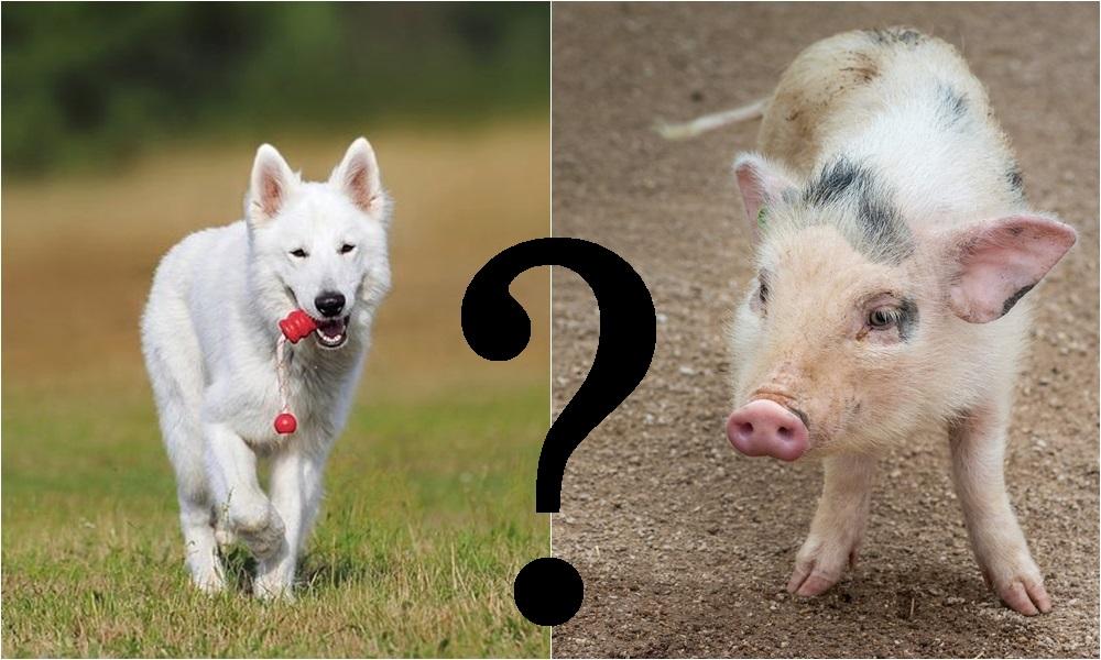 Kutyaól vagy kutyaház? Tegyük tisztába!